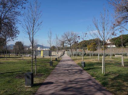 En la imagen, los árboles que se plantaron en la primera fase de sustitución