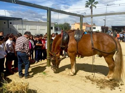 Aquesta experiència apropa els escolars al món de la pagesia